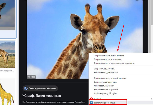 Выбор строки «Search Image on TinEye»